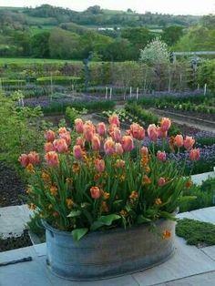 Beauty Tulips Arrangement of Home Garden 9 – Container Gardening ideas - How to Make Gardening Container Plants, Container Gardening, Gardening Tips, Parc Floral, Pot Jardin, Tulip Bulbs, Garden Cottage, Garden Planters, Dream Garden