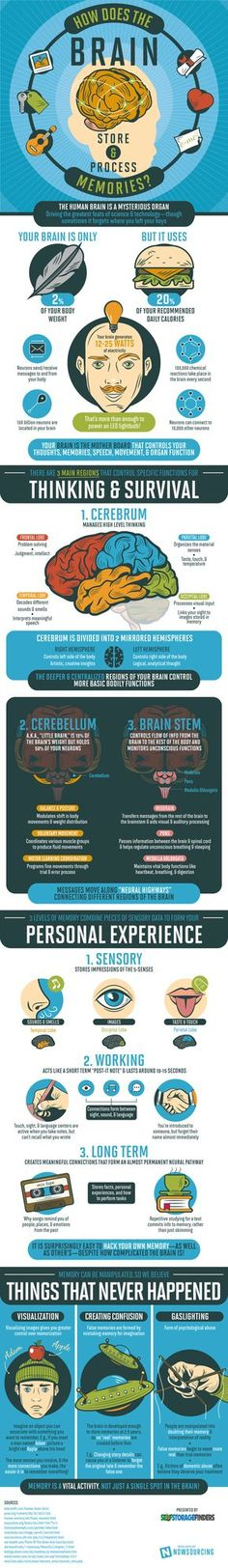 How Your Brain Stores and Processes Memories #Infographic #Brain