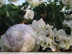 sapone di aloe vera di coltivazione ecologica avvolto da lana gotland in tinte rosa, tortora naurale  e bianco