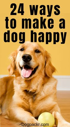 As dog owners, there's nothing we love more than our dogs. They keep us company, make us smile, and they're so darn cute!But dog ownership isn't just about us—it's about the dog too! And dogs make us happy, so it makes sense we want to make our dogs happy too. But how exactly do we do that? If you're wondering whether you're making your dog happy, or you're looking for some new things to try, here are 24 things that will make your dog one happy doggo! #happydog #dogs #welovedogs Dog Training Techniques, Dog Training Tips, Dog House Kit, Dog Food Delivery, Excited Dog, Dog Health Care, Hiking Dogs, Dog Games, Dog Activities