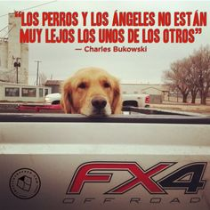 frases perros 8