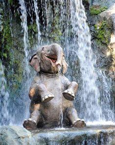 Elephant Photography, Animal Photography, Cute Little Animals, Cute Funny Animals, Nature Animals, Animals And Pets, Wild Life Animals, Smiling Animals, Wildlife Nature