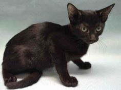 ***TO BE DESTROYED 08/29/17*** BOBBI A1121940