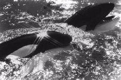 Blog de angelfive - Page 35 - Pour l'amour des orques - Skyrock.com