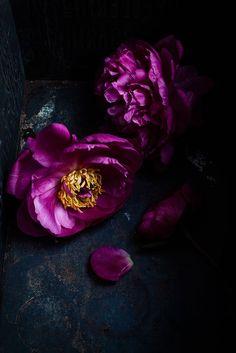 ♂ Still Life purple flowers