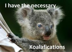 I have the necessary kolafications ... doesn't matter what for, I'm kolafied ... and kute too!