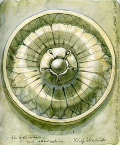 """""""watercolor study of Rosette Medallion as architectural ornament"""" by James Langley"""