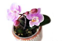 orquídeas baño
