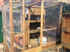 Rabbit Enclosure, Bunny Cages, Raising Rabbits, Ladder Decor, Cat Trees, Dream Houses, Gallery, Rat, Gardens