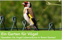 #Vorarlberger Bloghaus: [ #natur #freunde #umwelt ] Ein Garten für Vögel Parrot, Animals, Kids Book Series, Education, Friends, Nature, Life, Lawn And Garden, Parrot Bird