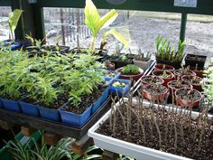 how to propagate trees & flowering plants- going to attempt this as we start landscaping!!