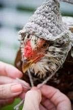 Chicken hat! lol