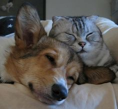 ~<3~...I love silver gray cats with stripes! kitty and puppy love...