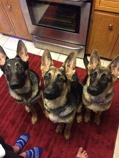 """Hope you're doing well..From your friends at phoenix dog in home dog training""""k9katelynn"""" see more about Scottsdale dog training at k9katelynn.com! Pinterest with over 21,700 followers! Google plus with over 435,000 views! You tube with over 500 videos and 60,000 views!! LinkedIn over 11,200  associates! Proudly Serving the valley for 12 plus years! now on instant gram! K9katelynn"""