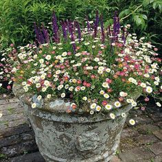 Erigeron Stallone Flower Plants £ By Mr Fothergills Seeds A Fantastic .Erigeron Stallone Flower Plants £ By Mr Fothergills Seeds A fantastic plant with lots of small, daisy-like flowers that fits in patio Hanging Plants, Garden Projects, Plants, Cottage Garden, Small Gardens, Flower Planters, Mediterranean Garden, Container Gardening, Container Gardening Flowers