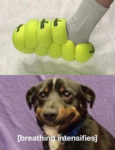 Every dogs dream shoe Funny Dog Memes, Funny Texts, Funny Dogs, Funny Animals, Funny Quotes, Got Memes, Dankest Memes, Jokes, Stupid Funny