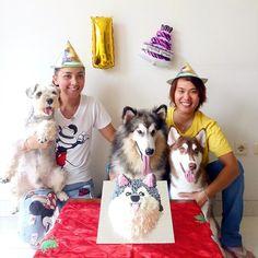 My big girl keiko the alaskan malamute having her 1st birthday yeaayy..