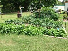Urban Homestead Houston shows how easy it is to add a garden to your yard.