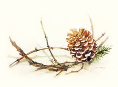 Watercolor Painting Pine Cone with Branch by blackteacafe on Etsy, $20.00