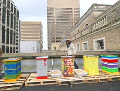 Corky Luster, founder of Ballard Bees, with hives on the roof of the Fairmont Olympic hotel, WA