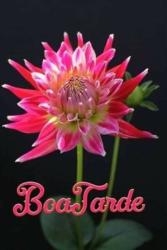 Good Afternoon, Plants, Posters, Beautiful Flowers, Photo Galleries, Succulents, Roses, Scenery, Frames