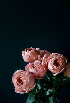 """Romantic Antike"" roses"