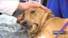Once the dog was sedated, veterinary staff and firefighters worked together to remove the bone.