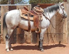 Ranch Versitility Gelding For Sale - For more information and to see video click on the image or see ad # 35486 on www.RanchWorldAds.com