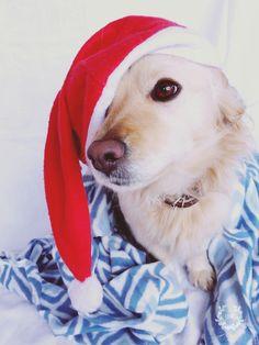 CHRISTMAS ♡♡♡