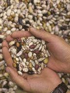 Seed Saving Workshop iowa
