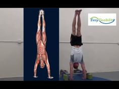 How to Handstand Progression Tutorial Muscle Animation Promo EasyFlexibi...