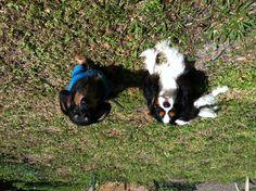 Best buddies sunbathing early spring 2012