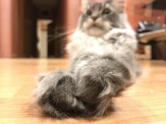 Fluffy Paws http://ift.tt/2zaml3j