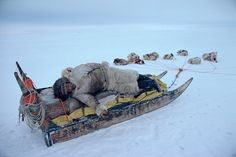 Fur dressed Inuit hunter, Mamarut, rests on his sled, whilst on a hunting trip. American Spirit, Native American, Inuit People, Tlingit, Inuit Art, Magnum Opus, Avatar The Last Airbender, Sled, First Nations