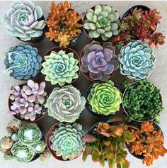 house plant care colorful potted succulents