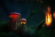 Glowing Mushrooms - Imgur
