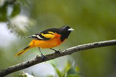 Outstanding images of birds.