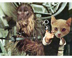 Star Wars Cats - Daye of Dog & Pony Show Create Iconic Photoshopped Felines