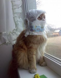 this is a cat in a diaper.