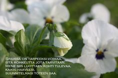 RunoTalon voimapuutarha: Treenaa vahva kiitollisuuden lihas Wisdom, Garden, Modern, Plants, Garten, Flora, Plant, Lawn And Garden, Outdoor