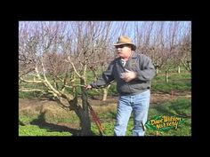How to Graft a Tree. If you like a tree's fruit and want more of it, your best option may be grafting. This is the only way to guarantee the fruit will come out the same. There are various ways to graft, but with practice and these.