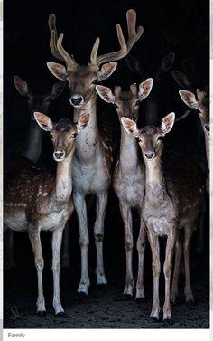 Jóvenes venados ...Una de las glorias de la civilización sería el haber mejorado la suerte de los animales sin maltrato y muerte