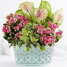 http://newplantsfor.magnoto.com/ Plant Arrangements For Funerals,  Plants For A Funeral,Funeral Plants Arrangements,Funeral Plants Floor Plants,Funeral Plants And Flowers,Plant Arrangements For Funerals