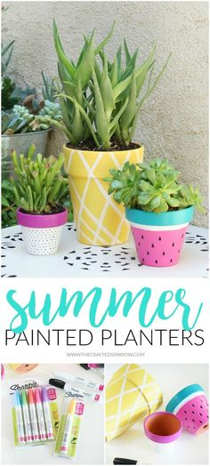 Summer Painted Plant