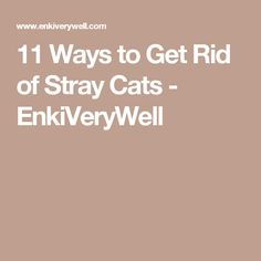 11 Ways to Get Rid of Stray Cats  - EnkiVeryWell