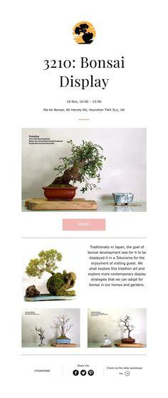 3210: Bonsai Display