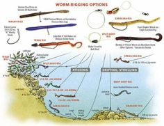 The smallmouth worm is different. I'm not the world's most prolific or well-travelled largemouth fisherman but tell me if I'm wrong: Finesse worms catch small bass. Trout Fishing Tips, Fishing Rigs, Fishing Knots, Saltwater Fishing, Kayak Fishing, Crappie Fishing, Fishing 101, Fishing Stuff, Fishing Videos