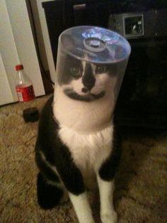 koketování s kočkou