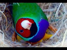 10 Ideas De Canarios Canarios Aves Cuidar Animales