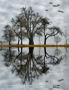 "anmazine: ""Photography by Admin http://dazzlingnatures.com/2014/02/21/reflection/ """